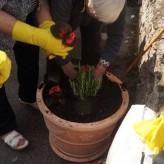 Volonterska akcija u sklopu projekta ZELENO SRCE – uređenje okoliša Cvjetnog doma (Dom za starije i nemoćne)